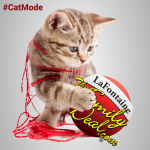 Cat-Mode-Square-Image