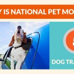 Dog-Travel-Tips-May-National-Pet-Month