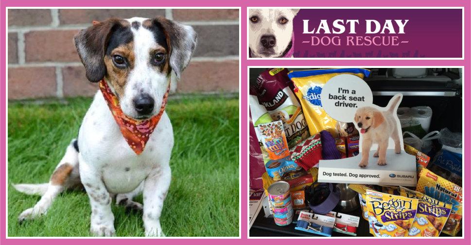 Last-Day-Dog-Rescue-LaFontaine-Subaru-Adoption-Drive