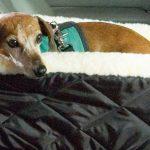 02 - Dog Console Car Seats