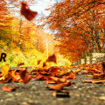 falltogether_facebookcover_851x315